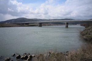 福井・九頭竜川の高屋橋辺りは桜鱒釣りの絶好のポイントである
