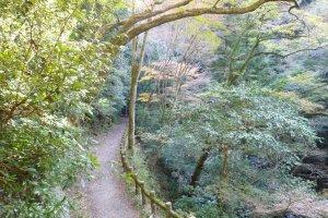 Takimichi trail