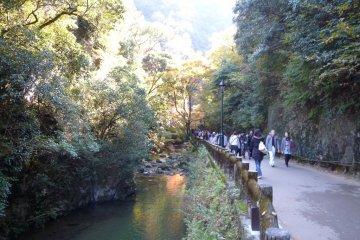 Прогулка вдоль ручья