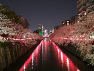 Con sông Meguro của Tokyo
