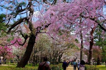 Kyoto Gyoen Garden in Spring