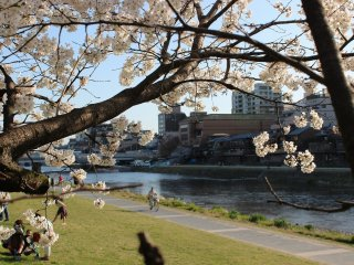 You can enjoy the beautiful afternoon sunshine along the bank of the Kamogawa River near Nijo Oohashi Bridge