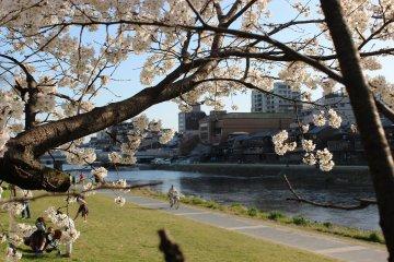 京都鴨川のほとりを歩く