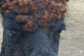 <p>Dark&nbsp;skin with curly hair.&nbsp; Cool!</p>