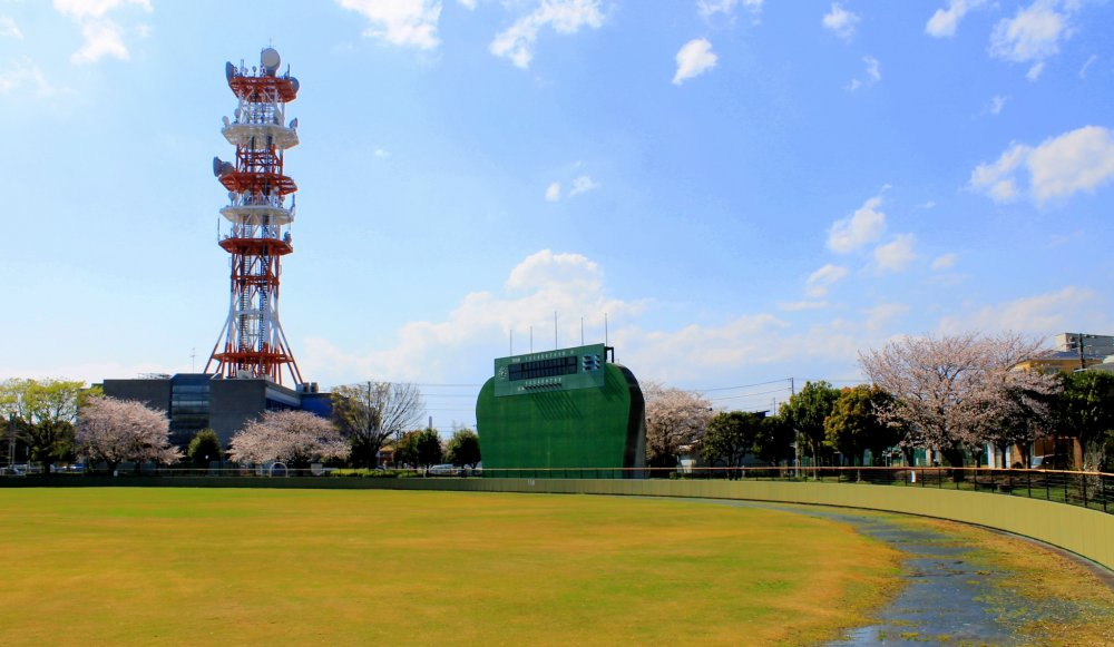 Around the soccer field, several Cherry Blossom trees stand, creating a relaxing panoramic view.
