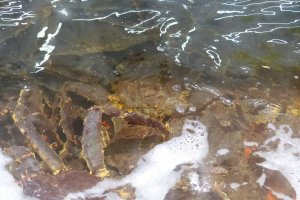 อาหารทะเลมากมายไม่ว่าจะเป็นปู หอย กุ้ง ปลาหมึก