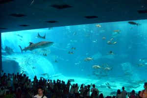 Not quite the neighborhood sushi-shop: the panoramic Kuroshio tank.