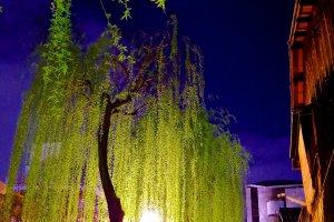 밤의 기온 시라카와 거리