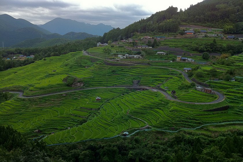 Thousands of rice paddies of all shapes and sizes are carved into the hillside.
