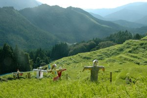 Scarecrows stand guard over the terraced rice paddies