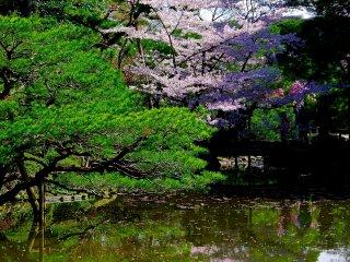 Stepping stones in the pond of Shin-en Garden