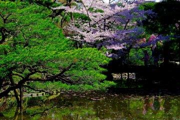 <p>Stepping stones in the pond of Shin-en Garden</p>