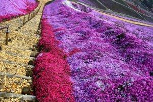 พรม Pink Moss ปูขนานกับทางเดิน