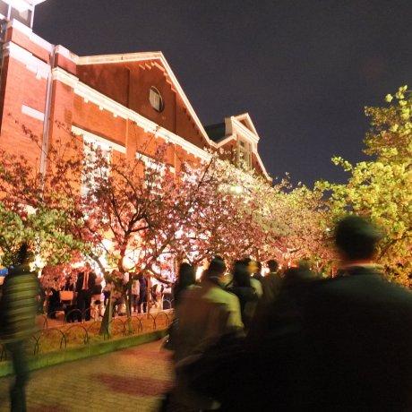 ชมซากุระกลางคืนที่โรงกษาปณ์โอซาก้า
