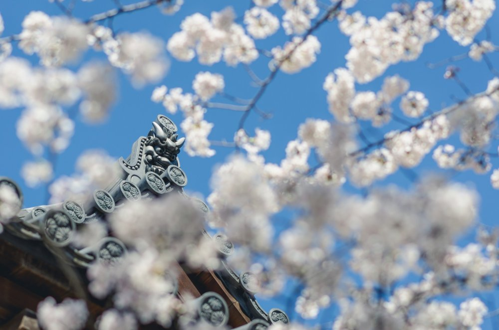 The beauty of Zojoji's architecture mixed with the beauty of blossoms makes for a grand contrast.