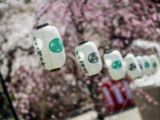 Lanterns are a popular decoration wherever cherry blossoms are found.