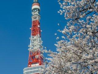 조죠지는 꽤 오래되었지만, 도쿄의 중심부에 있기 때문에 세계적으로 유명한 도쿄 타워와 같은 많은 현대 건물들의 경치를 자랑한다