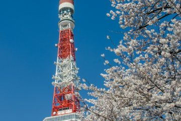 <p>Although Zojoji is quite old, being in the heart of Tokyo it also boasts views of many modern buildings such as the world famous Tokyo Tower.</p>