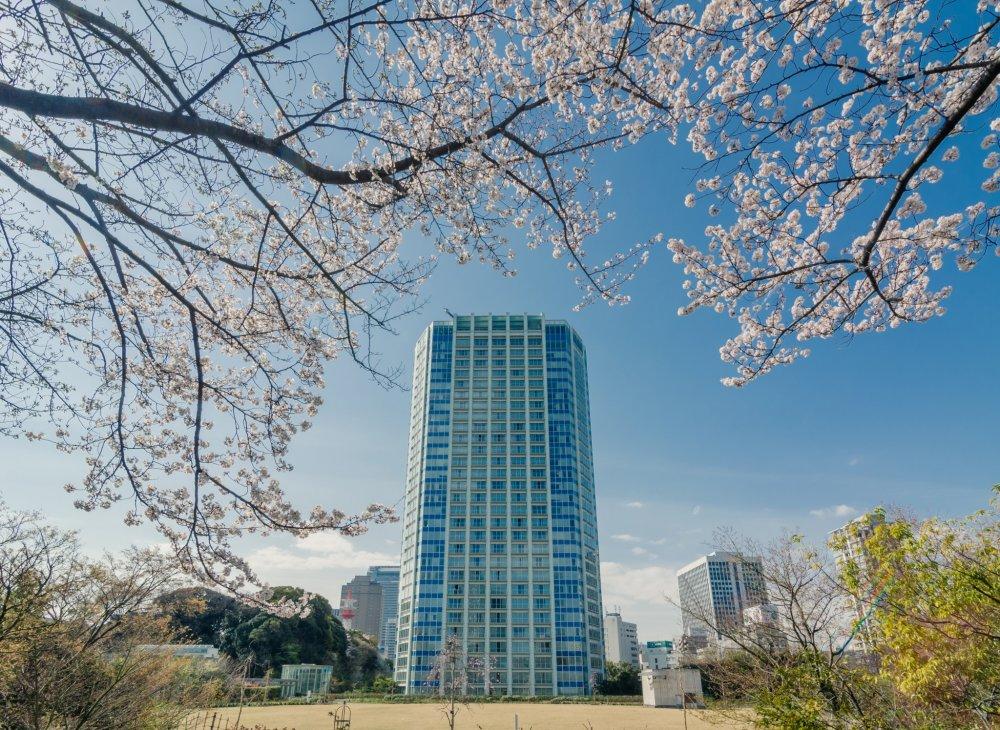 東京で、そして芝公園では間違いなく最高のホテルの一つ、ザ・プリンス・パークタワー東京。桜の木陰で佇むその姿はいつになく美しい
