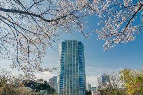 芝公園界隈の桜