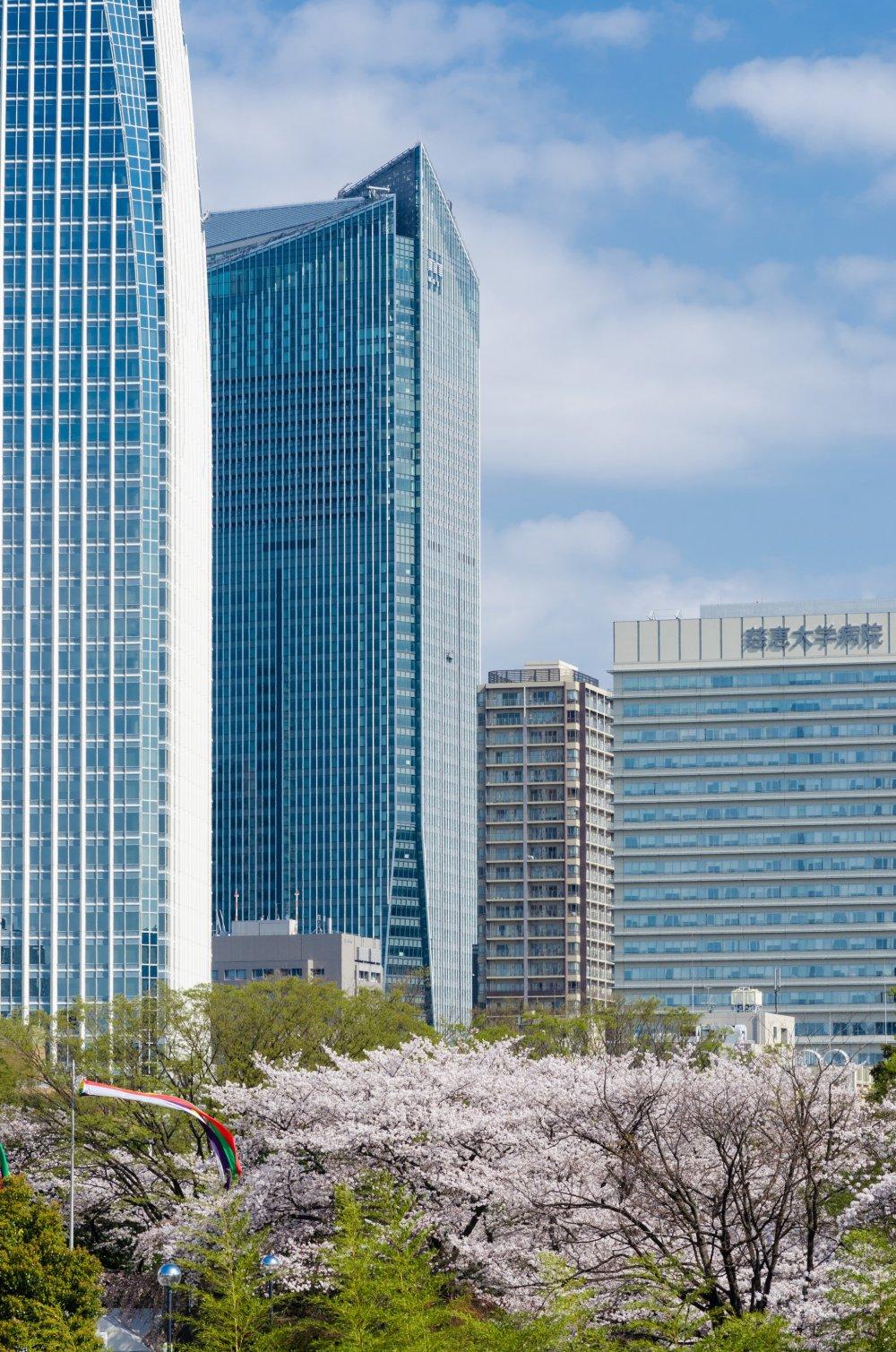 公園や木々を高層ビルの眺めと共に楽しめる都市は世界中にある。でも桜と共に眺められる場所は東京ぐらいのものだろう。ご覧のとおり、素晴らしい景色だ。