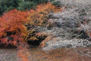 สีสันแห่งฤดูใบไม้ร่วงและฤดูใบไม้ผลิที่หลอมรวมกัน
