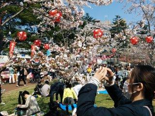 Este é um evento para apreciar flores e tirar fotos!