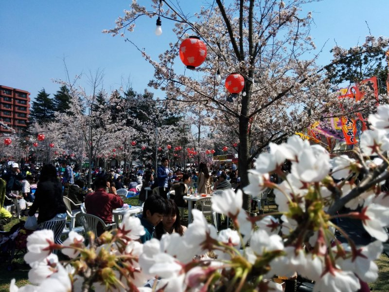 <p>Be creative with your pictures at your next hanami.&nbsp;</p>