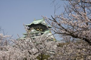 Osaka Castle is a favourite spot for cherry blossom photography.