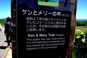 จะมีต้นไม้กลางทุ่งกี่ต้นที่มีคนรักถึงขนาดทำป้ายประวัติสองภาษาให้