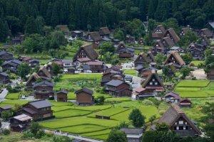 หมู่บ้านชิระคะวะโกะในฤดูร้อนมีไร่นาสีเขียวชอุ่มรับแสงอาทิตย์