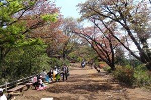 ปิกนิกที่ Takaosan Senbonzakura ดินแดนแห่งซากุระ 1000 ต้นของภูเขาทะกะโอะ