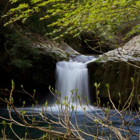 Seven Waterfalls Hidden in Izu