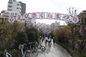 The 43rd annual Bunkyo Cherry Blossom Festival held was on March 29, 2014.