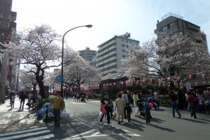 Bunkyo shuts down its streets so visitors can peacefully walk through the neighborhood and enjoy the cherry blossom trees.