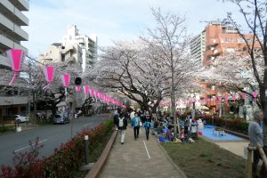 With little grass to speak of, Bunkyo citizens make the most of its famous hill by celebrating on the small sliver of land between two main roads.