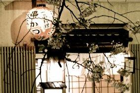 Gion Shirakawa đêm mùa xuân