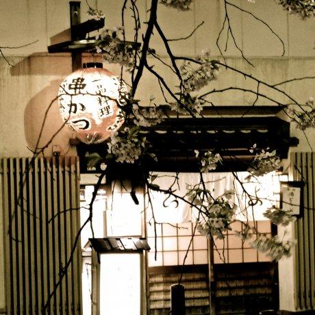 Gion Shirakawa at Night in Spring