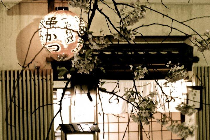 คืนใบไม้ผลิที่กิอน ริมน้ำชิราคาวา