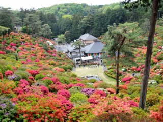 A walking path runs around the upper rim of the 'bowl', and dirt trails wind through the azalea bushes.