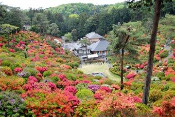 Tokyo's Best Azalea Festival