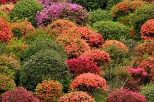 Vào ngày mùng 3 tháng 5, hãy chiêm ngưỡng sắc màu rực rỡ của hoa đỗ quyên và một ngọn lửa thực sự, được đốt để những người mới tập tu đi qua.