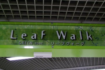 <p>Nature-themed hallways</p>