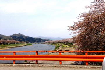 <p>Along the Hinokinai River, there are over a thousand trees that line the banks.</p>