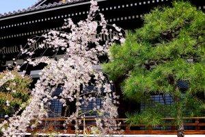 Honno-ji Temple in spring