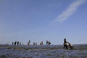 <p>ท้องฟ้าสีฟ้า ดอกไม้ก็สีฟ้า</p>