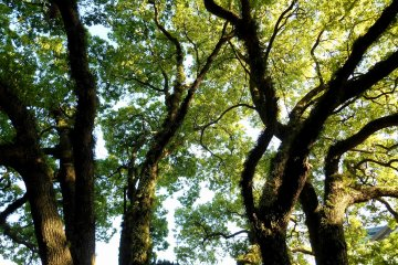 <p>Another bunch of trees that seemed to be alive and moving</p>