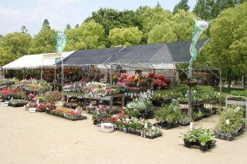 <p>Stalls selling flowers</p>