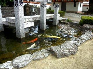 Koi pond symbolizing Jofuku's seven disciples