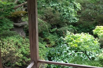 <p>The garden where Issa wrote his famous haiku.</p>